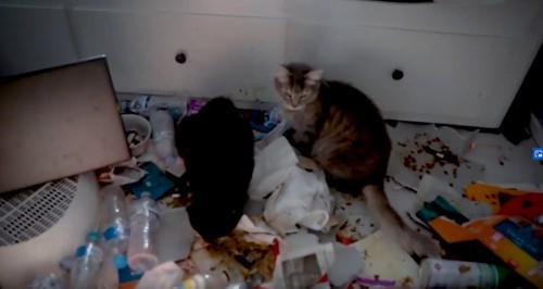 ゴミを食べる猫