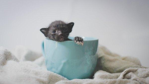 生まれたてのカップ猫