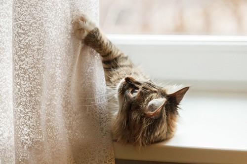 カーテンで遊ぶ猫