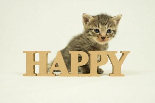 HAPPYの文字と子猫