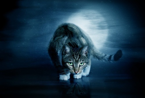 夜行性の猫