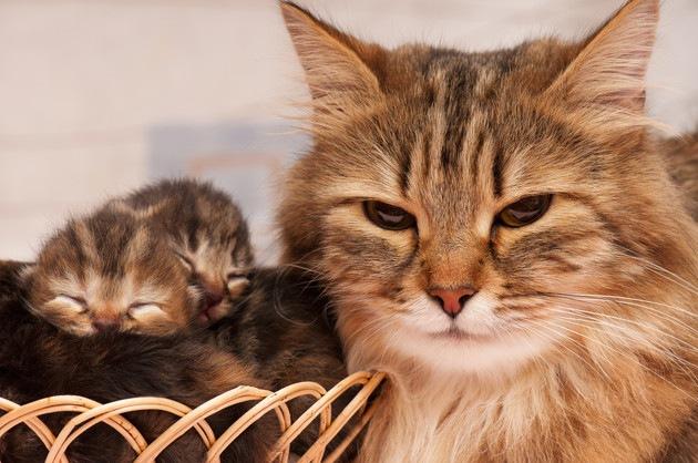 #子猫と母猫#
