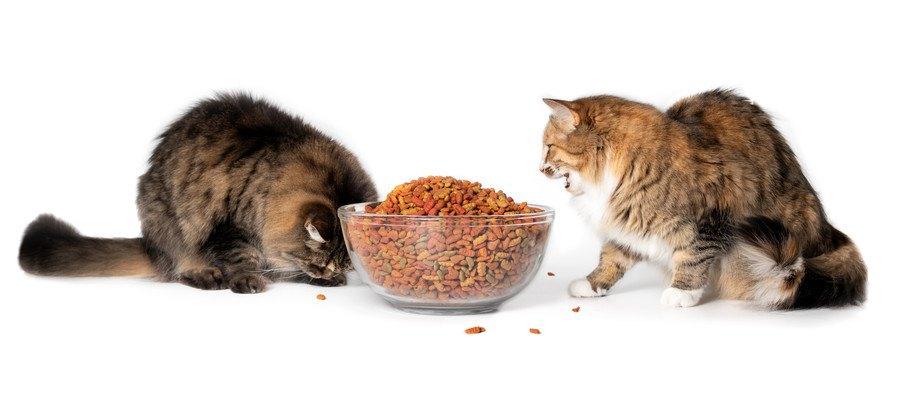 たっぷりのご飯を食べる二匹の猫