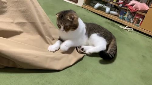 寝転がって前足が浮いている猫