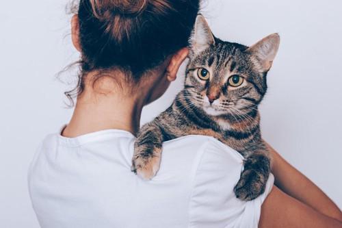 抱かれてこっちを見ている猫
