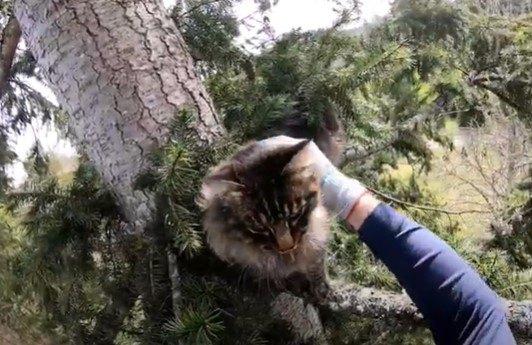 猫のトア―の背後に見える地上が遠い