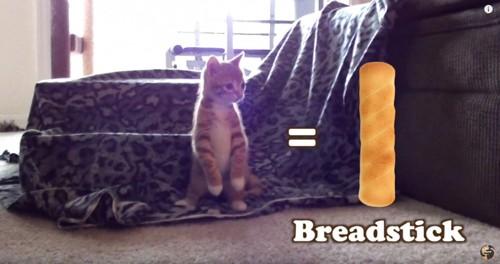 後ろ足で立つ子猫