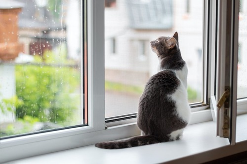 窓辺に座って外を見ている猫