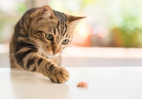 テーブルの上のアレルギーフードに手を伸ばす猫
