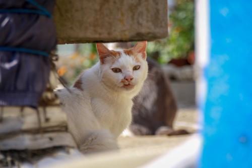 猫島の野良猫たちの生活