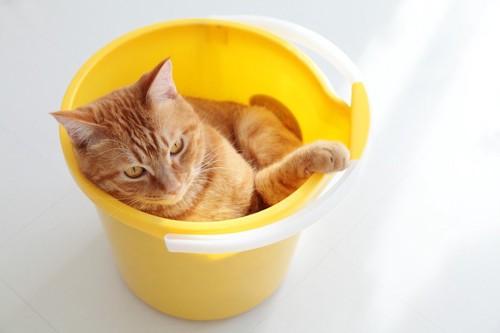 バケツへ入る猫