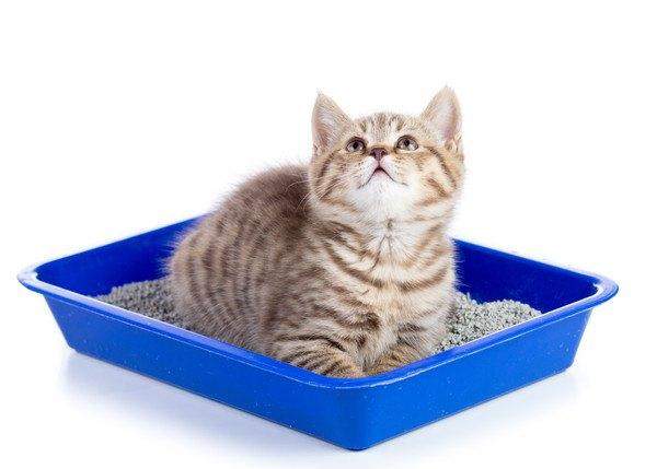 青いトイレと猫