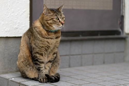 玄関で出迎える猫