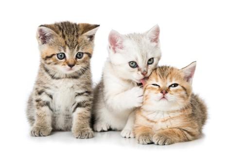 寄り添う3匹の子猫