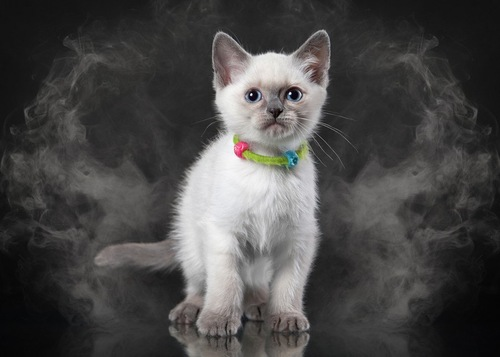 煙に包まれている猫