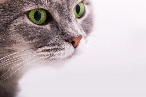 緑色の目をした猫
