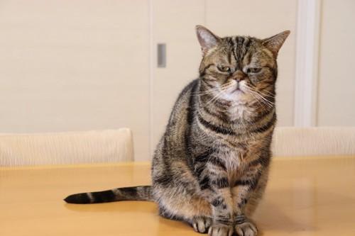 悲しげな表情でテーブルの上に座る猫