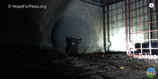 排水管から出てきて鳴く子猫