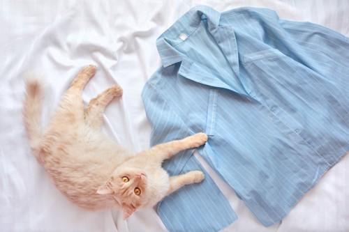 パジャマと猫
