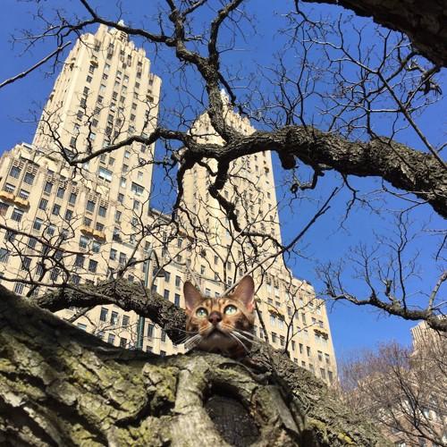 セントラルパークの木の上にいる猫