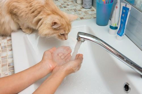 手を濡らす飼い主を見る猫