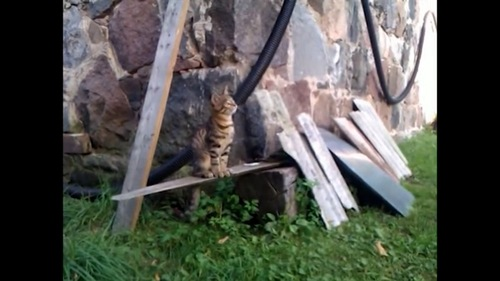 スタンバイ中の猫