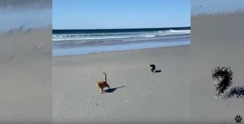 ビーチを歩く2匹の猫