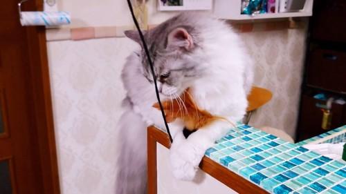 おもちゃを押さえる猫