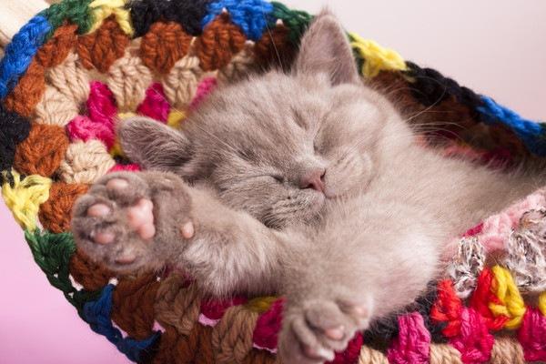 ハンモックに寝る猫