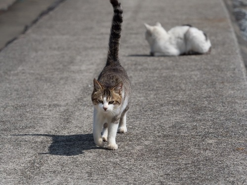 近寄る野良猫