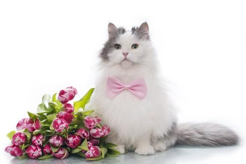 チューリップの花束と猫