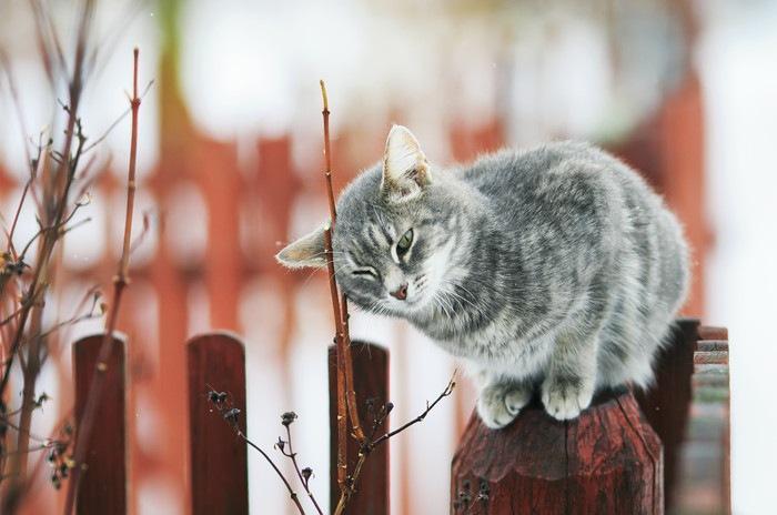 小枝に頭をこすりつける猫