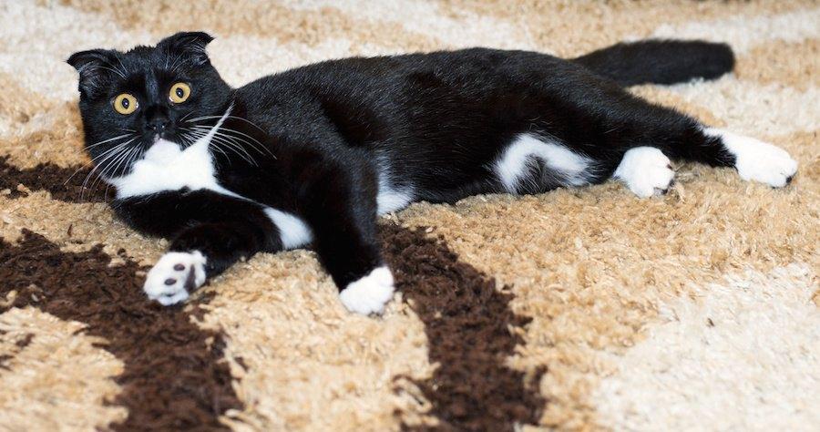 カーペットに横になる猫