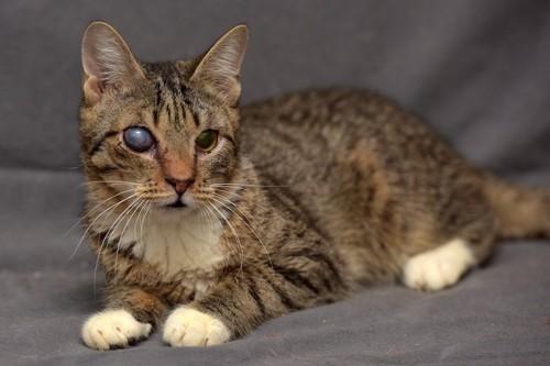 ソファーで休む目に濁りがある猫