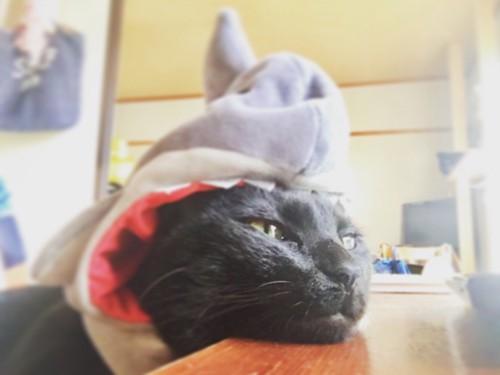 サメの被り物を被って暑さにバテているメイ