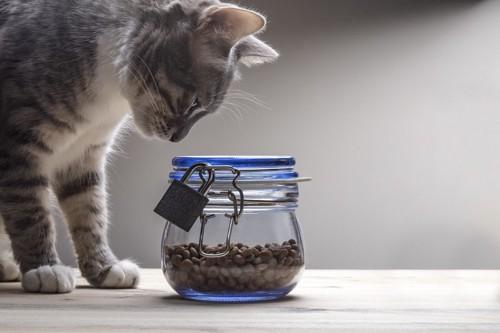 鍵のかかった入れ物を見つめる猫