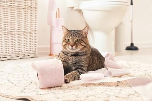 トイレの前の猫とトイレットペーパー