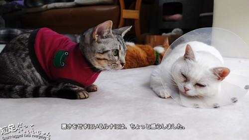 座る服を着た猫