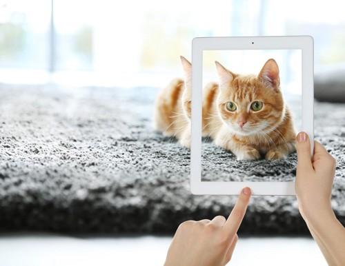 タブレットで猫を映す人