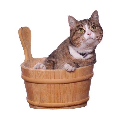 温泉が好きな猫