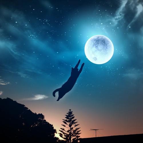 月を掴む猫