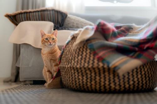 座って遠くから見つめている猫