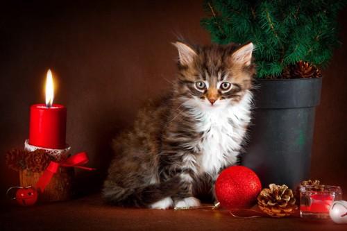 子猫とキャンドル
