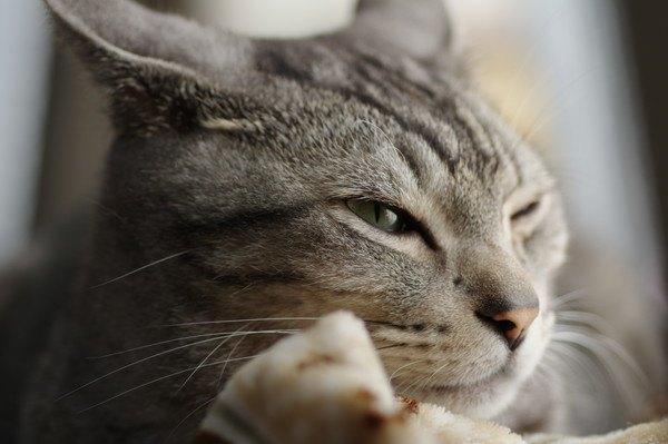 寝むそうな猫