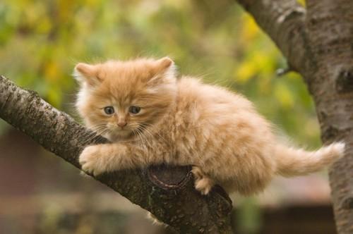 木に登り怯える子猫
