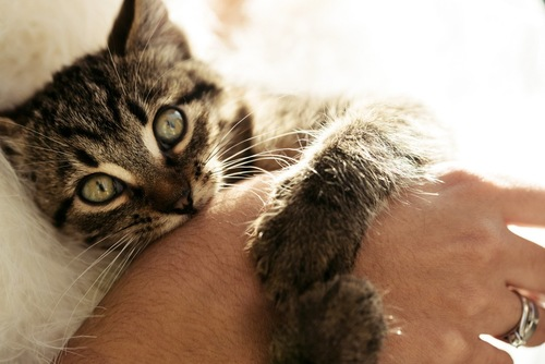 人の手を抱きしめる子猫