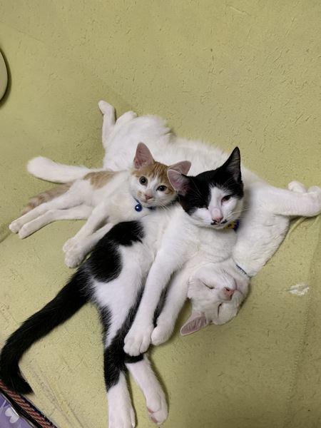 面白い格好で寝る3匹の猫