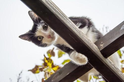 柱の上にいる猫