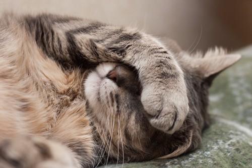 手で顔を隠して眠る猫