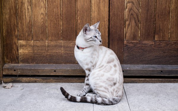 扉の前で座る猫